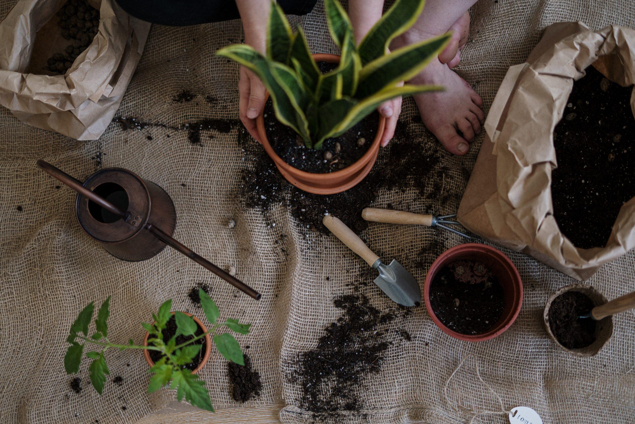 berbisnis pupuk tanaman